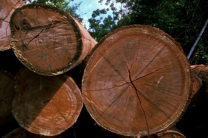 Illegally logged timber in Tanjung Puting National Park in 1999 (c) EIA