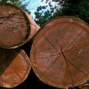 Landmark EU/Indonesia timber agreement now legally binding