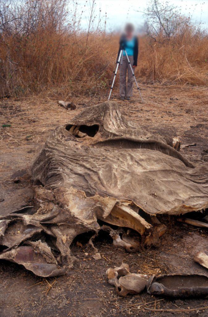 2001_Tanzania_Elephant_Carcass_01 - lo res