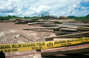 Illegal timber seized on the Malaysian border of Indonesia in August 2005 (c) EIA