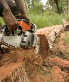 2006 Indonesia Illegal Logging (c) EIA crop