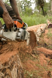 Illegal Logging in Indonesia, 2006 (c) EIA