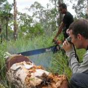 Vacancy: Have you the skills to be an EIA Investigator (Forests)?
