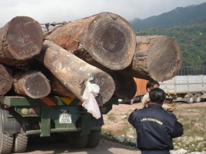 Customers officer inspecting a truckload of logs in Laos (c) EIA