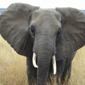 Mary Rice discusses what's next for elephants