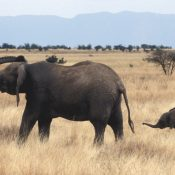 MPs listening to you over closure of UK ivory market