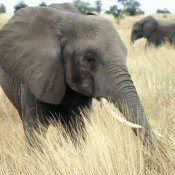 Updated: Take action now to tell MPs to end the ivory trade