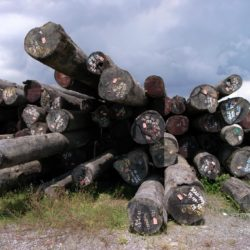 A pile of cataloged tree trunks