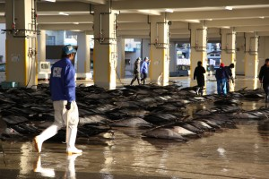 Fish market in Japan (c) EIA