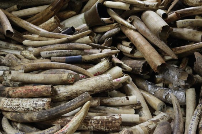 Wildlife Service ivory stockpile in storage room, Kenya