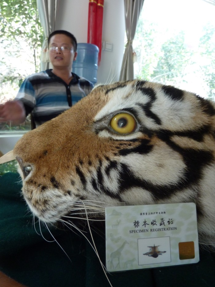 Tiger skin with official permit (c) EIA