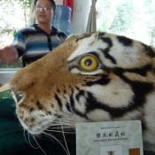China puts the 'con' in tiger conservation
