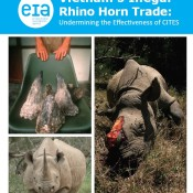 Vietnam's Illegal Rhino Horn Trade: Undermining the Effectiveness of CITES