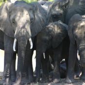 EIA calls for the closure of legal domestic ivory markets