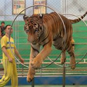 The tide of public opinion may be turning against animal performances in circuses in China