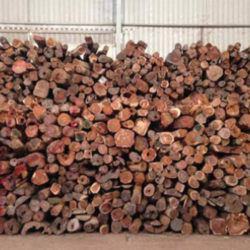 Large pile of Siamese rosewood logs inside a warehouse