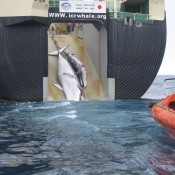 Yahoo! stays silent as whaling protests get ever louder