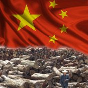China: Top buyer of illegal timber drives deforestation