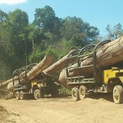 Corrupt Vietnam officials & Cambodia timber theft