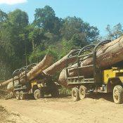 Corrupt Vietnam officials & Cambodia timber theft