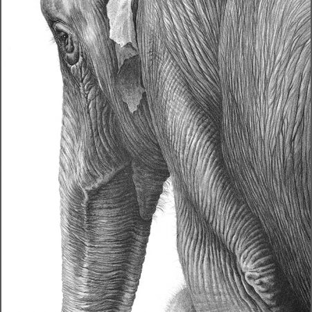 https://eia-international.org/wp-content/uploads/Asian-Elephant-with-young_gary_hodges_web.jpg