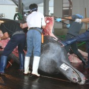 Alert update: Tell Yahoo! to stop selling whale & dolphin