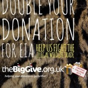 Are you ready to help EIA fight wildlife crime in The Big Give?