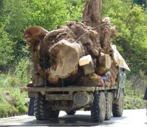 Log truck in Myanmar/Burma (c) EIA