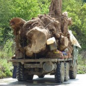 Undercover and on the trail of China's stolen timber