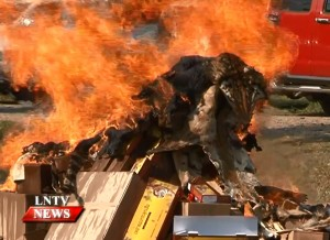 Burning wildlife contraband at the GT SEZ, screengrab via Laos National TV
