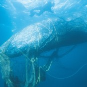 The shocking impacts of plastic pollution in our oceans
