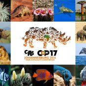 EIA briefings prepared for CITES CoP17