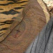 CITES in Geneva – time to tackle surge in wildlife crime