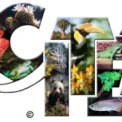CITES CoP17 opens next week … but what is CITES?