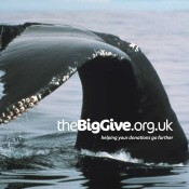 Join the Big Give and help us make 2014 a whale of a time!