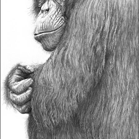 https://eia-international.org/wp-content/uploads/Chimpanzee_gary_hodges_web.jpg
