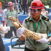China to end its ivory trade? We need substance, not ambiguity …