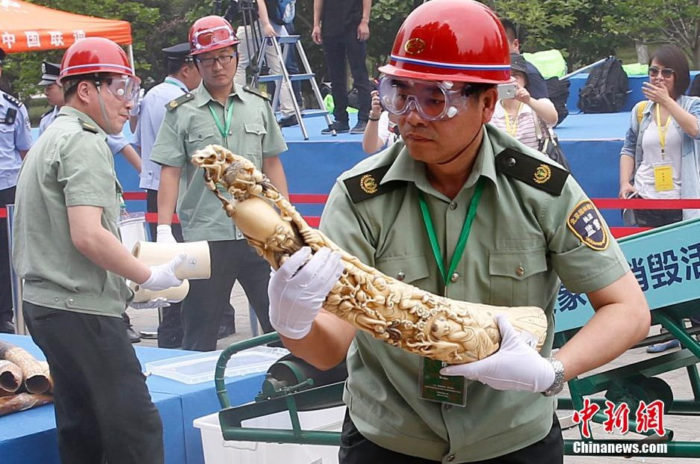 China destroys 662 kg of confiscated elephant ivory in Beijing, China (c) Chinanews dot com (3)