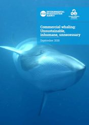 Commercial whaling – Unsustainable, inhumane, unnecessary