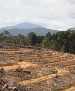 Deforestation for oil palm plantation in Kalteng, Indonesia, in September 2013 (c) EIA