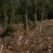 Hit-and-miss 'no deforestation' policies for palm oil show need for support by legal regulation