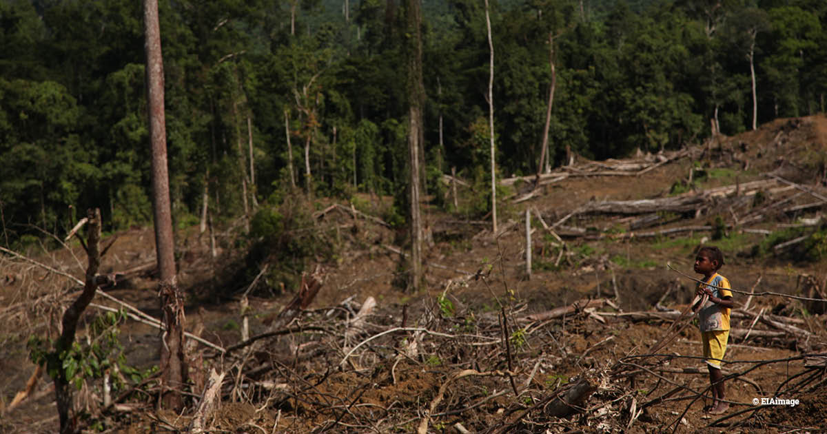 Deforestation for palm oil in Papua