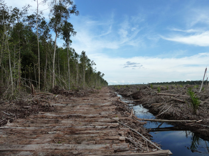 Deforested land in Indonesia (c) EIA