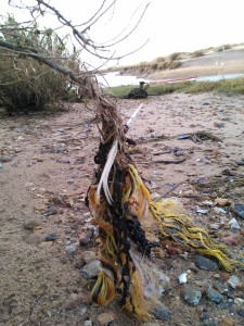 Discarded plastic rope at Blakeney Marshes © J Lonsdale