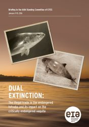 Dual Extinction: The illegal trade in the endangered totoaba and its impact on the critically endangered vaquita