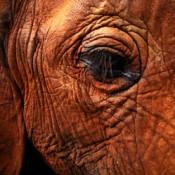 Alarm at secret meetings on ivory trade