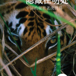 Chinese language cover for the Hidden in Plain Sight report