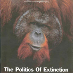 Front cover of our report entitled The Politics of Extinction: The Orangutan Crisis The Destruction of Indonesia's Forests