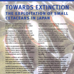Front cover of our report entitled Towards Extinction - The Exploitation of Small Cetaceans in Japan