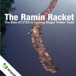 Front cover of our report entitled The Ramin Racket: The Role of CITES in Curbing Illegal Timber Trade